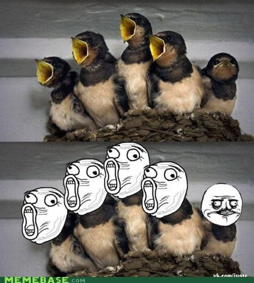birds,face,lol,me gusta,rage,song
