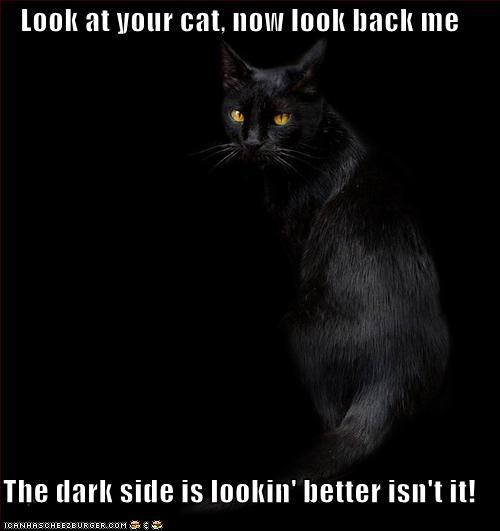 back better caption captioned cat dark Isaiah Mustafa look meme now old spice side