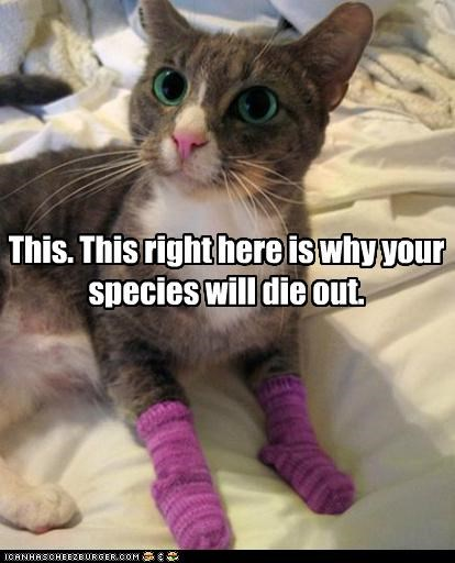 best of the week caption captioned cat die do not want Hall of Fame out reason socks species this why will - 5230520576