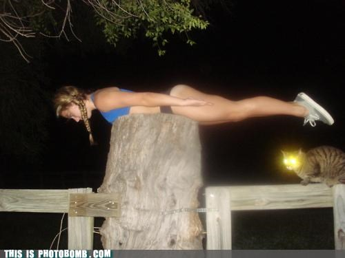 Animal Bomb cat girl Planking sunday bunday walk the plank
