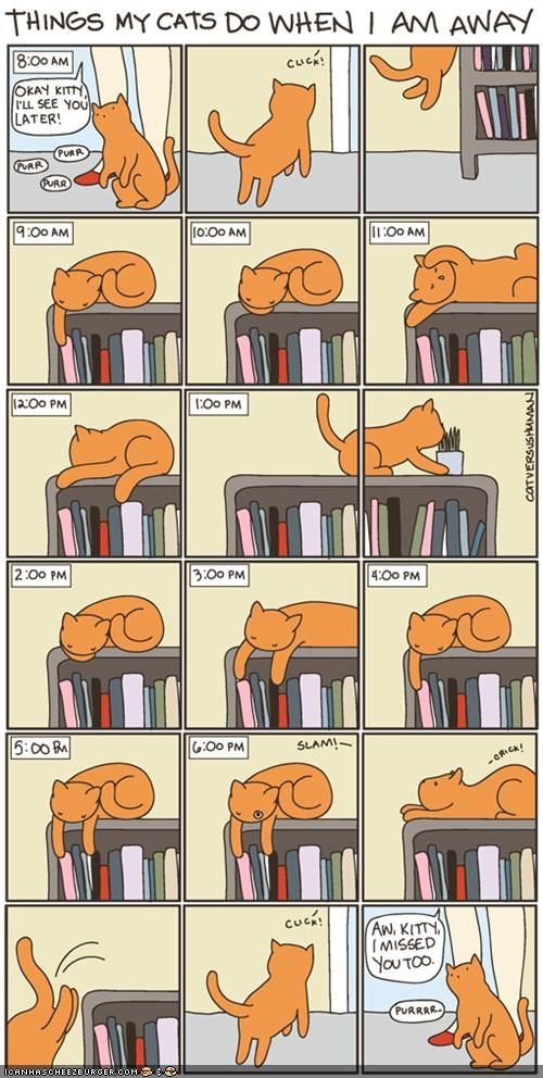 boring cat versus human comic comics lazy sleeping - 5230884352
