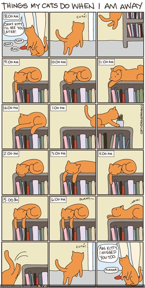 boring cat versus human comic comics lazy sleeping - 5230884352