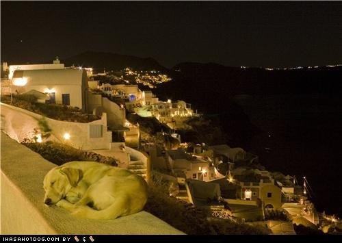 asleep,awww,labrador retriever,night,sleep,sleeping,vacation