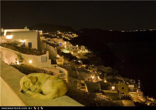 asleep awww labrador retriever night sleep sleeping vacation - 5230978048