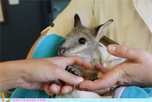 baby end squee spree tickles tickling ticklish wallaby - 5231222784