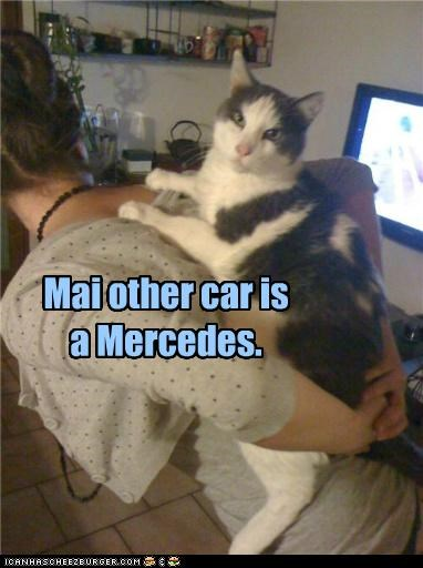 back caption captioned car carried cat human mercedes my other riding - 5231236096