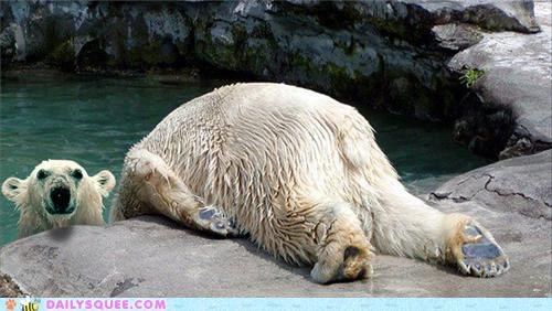 acting like animals,bear,fad,horsemaning,illusion,lolwut,meme,Planking,polar bear,polar bears,trick