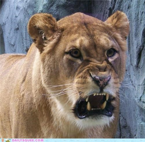 acting like animals cannot unsee do not want horrified lion lioness lolwut phyllis diller repulsed revolting - 5231278080