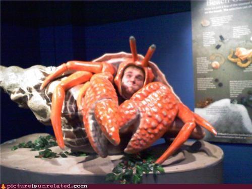 face guy lobster wtf - 5231284480