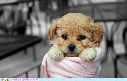 adorable,baby,delivery,dogs,present,presentation,puppy,special delivery,swaddling,wrapped up