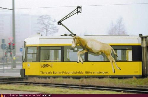 animal-non-human antelope train wtf - 5231323136