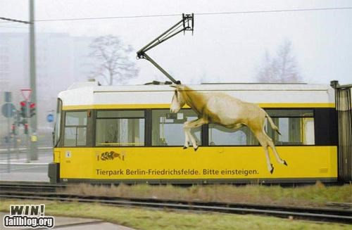 advertisement,animal,clever,hacked irl,train,zoo