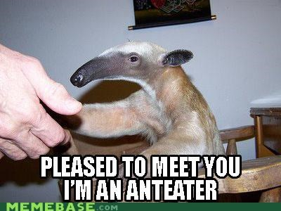 anteater,come at me,handshake,Memes,old times,pleased,what