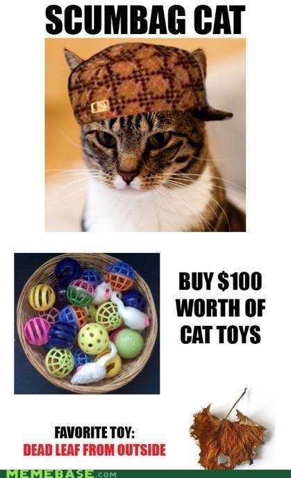 cat hat leaf Memes money toys - 5231882752