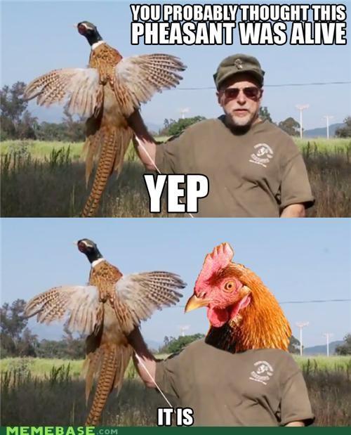 alive anti joke chicken Chuck Testa nope pheasant what - 5231964160