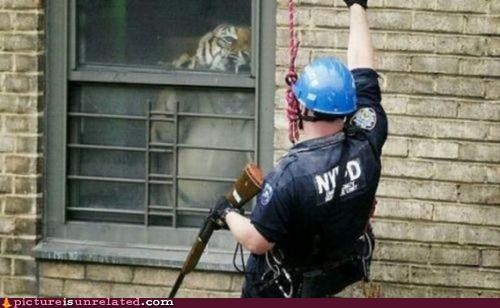 cop,tiger,trapped,window,wtf