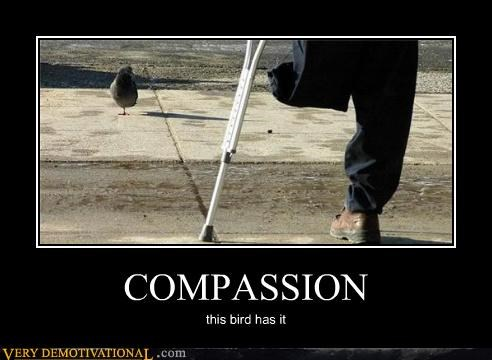 bird,compassion,hilarious,one leg