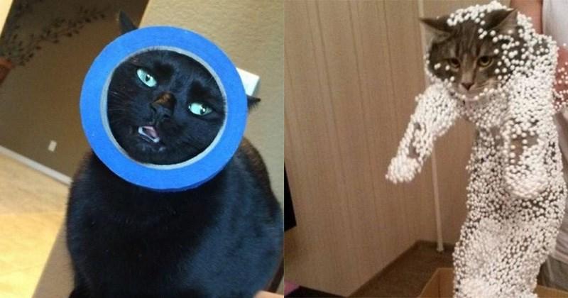 gatos diablillos