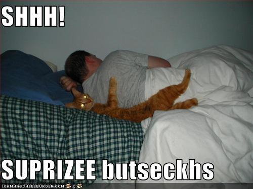 animals buttsex Cats cuddling I Can Has Cheezburger shh sleeping surprise surprise buttsecks - 5232442368
