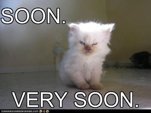 animals best of the week Cats grumpy Hall of Fame I Can Has Cheezburger intimidating scar SOON threatening - 5232541440