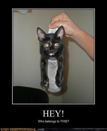 cat hilarious sock wtf - 5233385984
