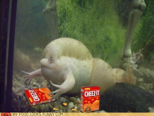 amphibian cheez its fat gross tadpole