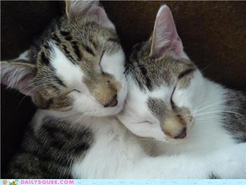cat Cats cuddling kitten names nomenclature reader squees sleeping - 5233644800