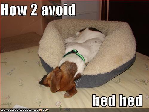 jack russel terrier sleeping - 523375360