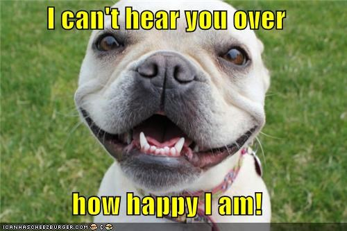 awesome french bulldogs happy happy dog smiles smiling - 5233769216