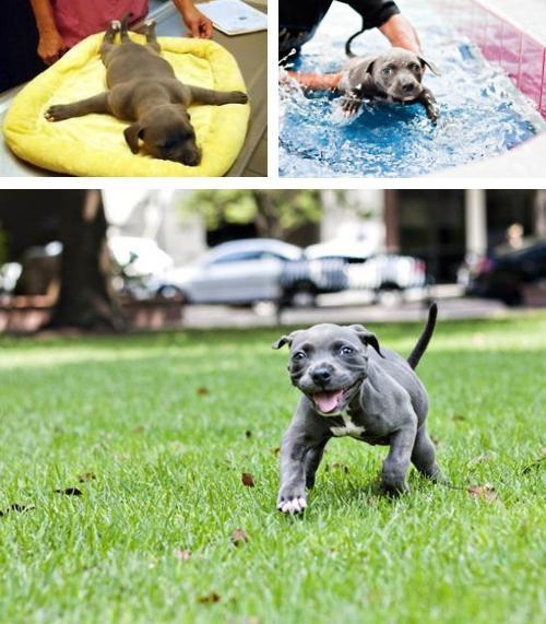Erica Daniel Harper the Pit Bull Heartwarming Tearjerker Look At This Dog - 5233974528