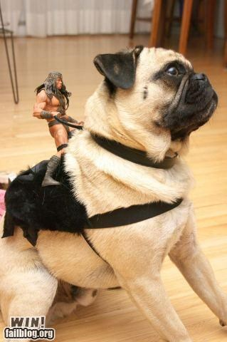 animal Conan the Barbarian dogs nerdgasm pets pop culture pug - 5234002944