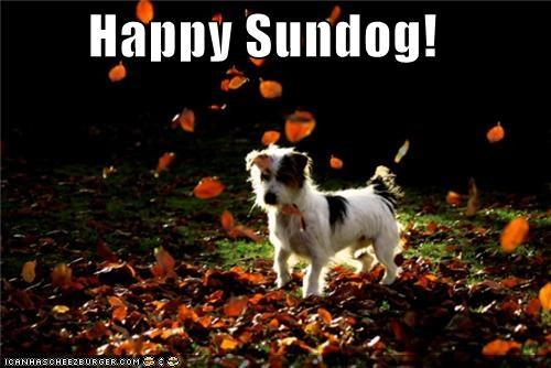 fall autumn happy sundog jack russell terrier leaves mixed breed Sundog terrier whatbreed - 5234475520