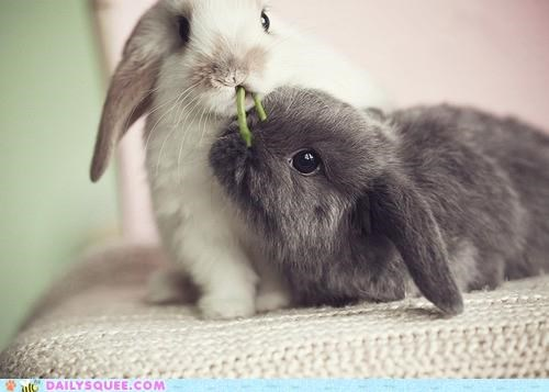 bunnies bunny food greens happy bunday lunch nomming noms rabbit rabbits sharing - 5234475776