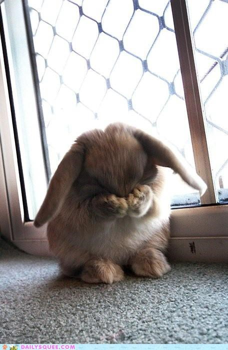 bunny FAIL Hall of Fame happy bunday hide hide and seek hider hiding losing seek seeker squee vicious cycle - 5234488576