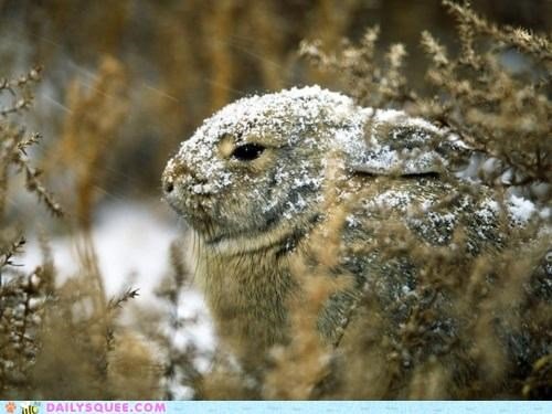 bunny,cold,color,happy bunday,offer,rabbit,snow,warming up,white