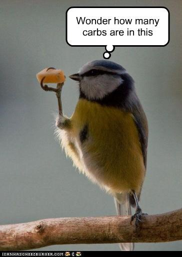 animals birds carbs diet eating food fruit hesitant I Can Has Cheezburger wonder - 5234748928