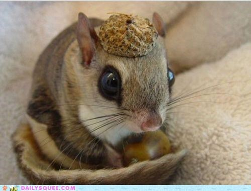 acting like animals couture fashion hat haute couture headpiece nut pun squirrel
