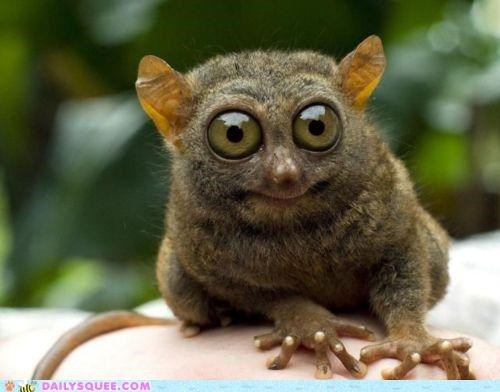 acting like animals bushbaby can dilated disappointment explanation optometrist pupils unsee - 5234835200
