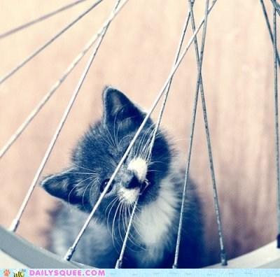 acting like animals baby bike biting cat kitten misinterpretation pun - 5234863360