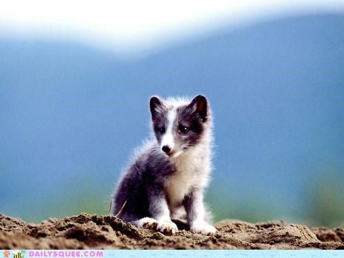 arctic fox,baby,explanation,fox,frizz,frizzy,fur,kit,pun,static