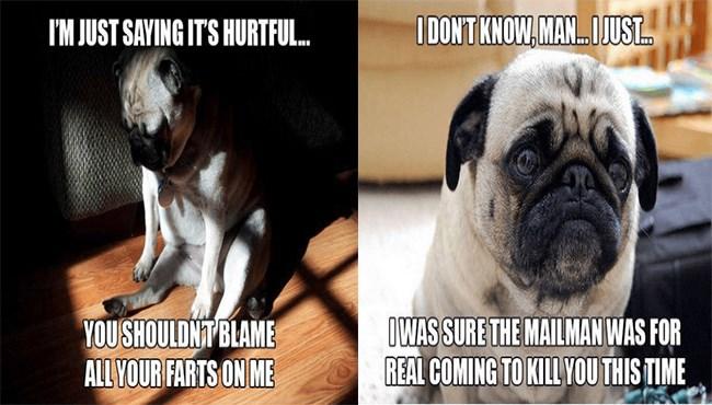 dogs pug thoughts deep - 5234949