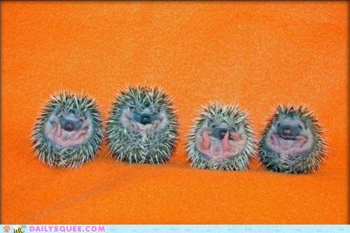 Babies baby color combination complimentary curled up favorite Hall of Fame hedgehog hedgehogs sleeping tiny