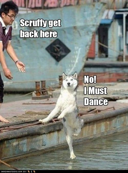 dance,husky,silly dog,walking on water