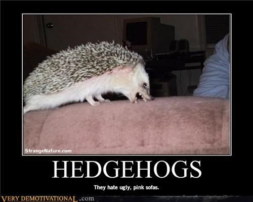 furniture,hate,hedgehog,Pure Awesome,sofas