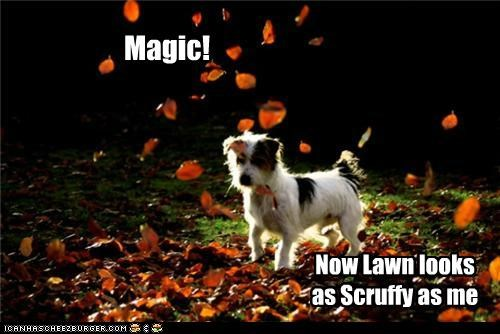 Magic! Now Lawn looks as Scruffy as me