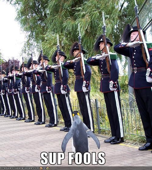 animals,awesome,fools,gangsta,military,penguin,sup fools