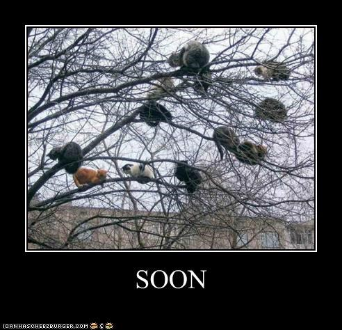 caption,captioned,cat,Cats,lolwut,meme,SOON,tree