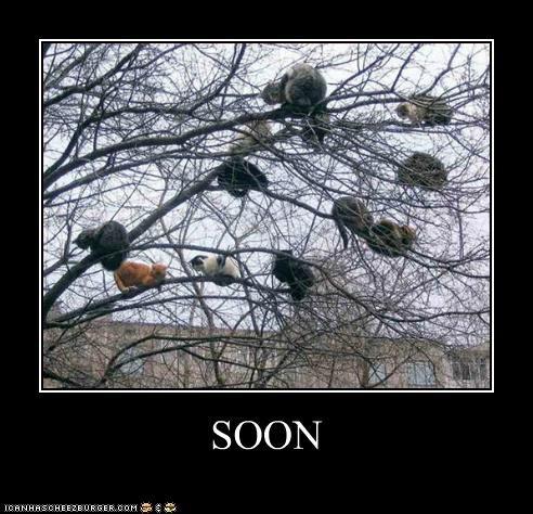 caption captioned cat Cats lolwut meme SOON tree - 5236760320