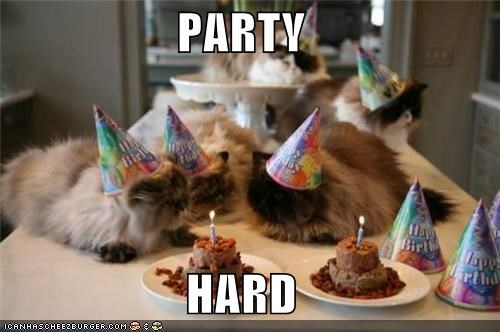 birthday,candles,caption,captioned,cat,Cats,food,hard,hat,hats,Party,sarcasm
