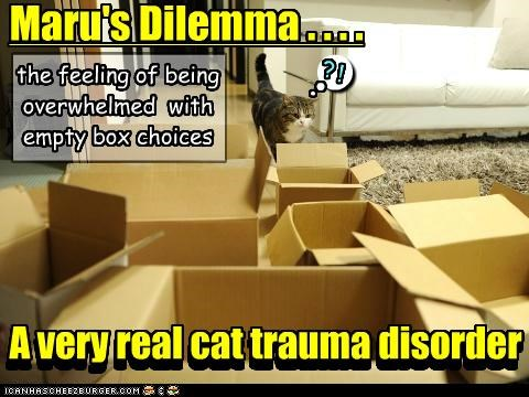 Maru's Dilemma . . . . A very real cat trauma disorder the feeling of being overwhelmed with empty box choices ! ? n n n gggggggggggggggggggggggggggggggggggggggggggggggggggggggggggggggggggggggg A very real cat trauma disorder